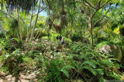 Durch den Dschungel an der Westküste von La Digue