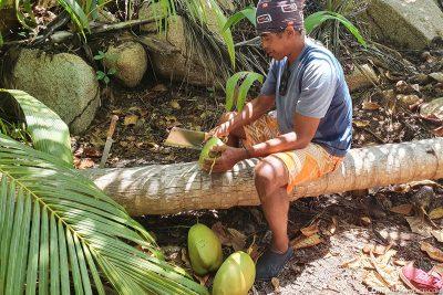 Öffnen einer Kokosnuss