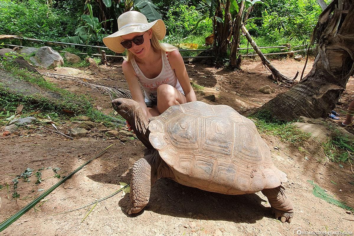 Giant Turtles, Cerf Island, Seychelles, Tour, Travelreport