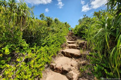 The hiking trail over the island