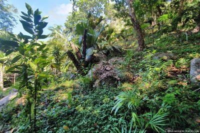 Die Flora und Fauna im Park