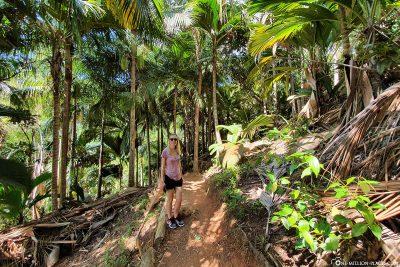 Der Weg durch den Nationalpark