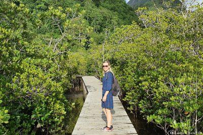 The trail through the mangroves