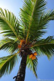 A beautiful palm tree