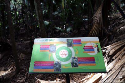 Info board Coco de Mer