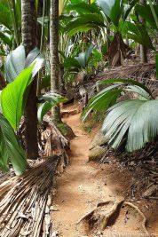 The paths in the Vallée de Mai