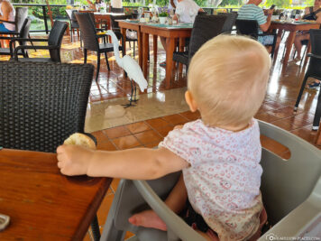 Animal visitors in the restaurant