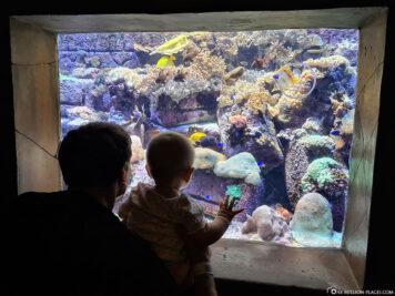 Fascinating underwater worlds