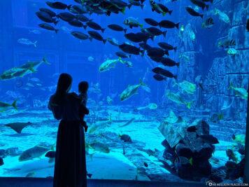 The large aquarium