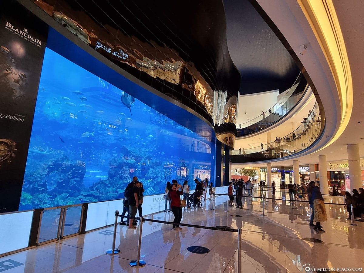 Dubai Aquarium, Dubai Mall, Kostenlos, Reisebericht