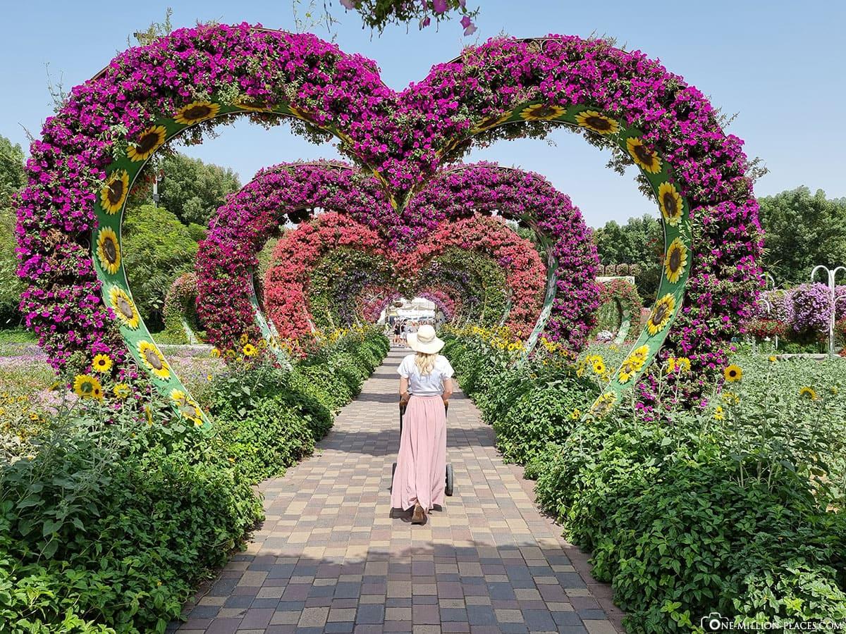 Blumentunnel, Dubai Miracle Garden, Sehenswürdigkeiten, Blumenskulpturen, Blumenpark