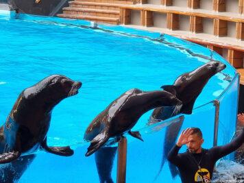 Die Seelöwen Show