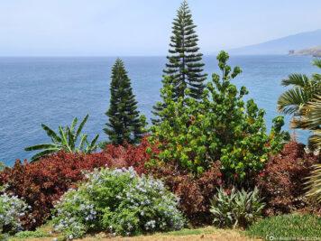Der Palmengarten Palmetum