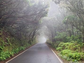 Straße durch den Nebelwald