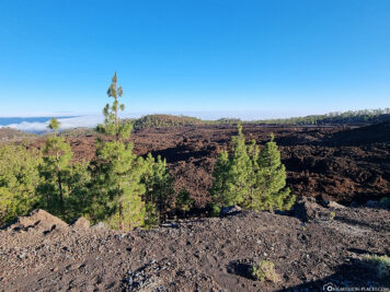 The old lava fields