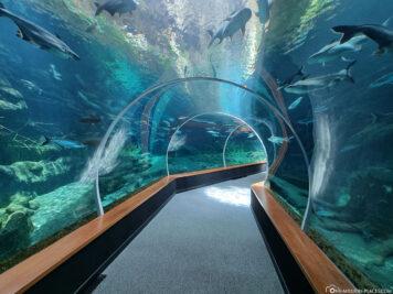 The Shark Tunnel