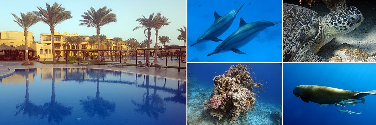 Travel Posts Marsa Alam